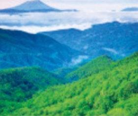 画像:山梨県 乙女高原 美しい緑 2019年カレンダー