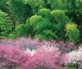 画像:茨城県 常陸太田市 美しい緑 2019年カレンダー