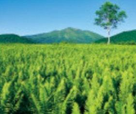 画像:長野県志賀高原 美しい緑 2019年カレンダー