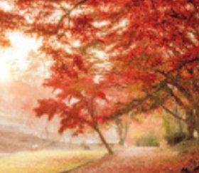 画像:静岡県 修善寺自然公園 日本の詩情(フィルムカレンダー・小) 2019年カレンダー