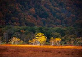 画像:森田敏隆 撮影「紅葉の尾瀬ヶ原」 天地自然・森田敏隆写真集 2019年カレンダー