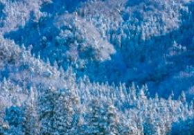 画像:森田敏隆 撮影「樹氷の木立」 天地自然・森田敏隆写真集 2019年カレンダー
