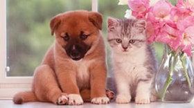 画像: 犬と猫の散歩道 2019年カレンダー