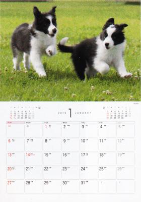 画像: Dog&Cat 2019年カレンダー