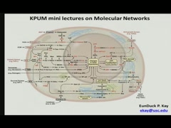Molecular Networks~Part.8