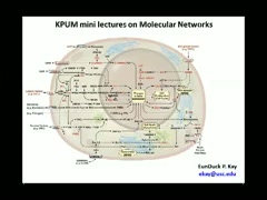 Molecular Networks~Part.13