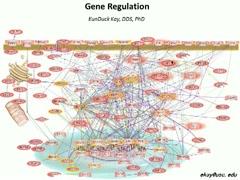 Cell Regulation~Part.2