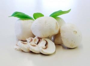 mushroom-1323729