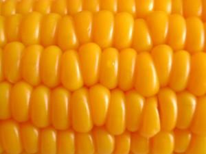 corn-1512939