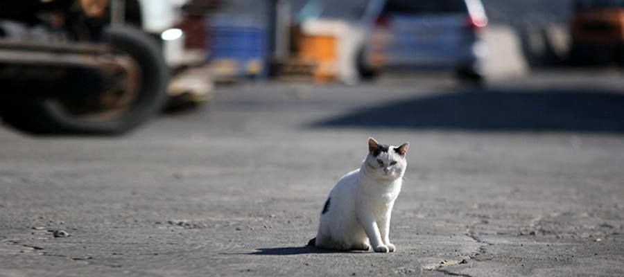 NPO法人猫と人を繋ぐツキネコ北海道