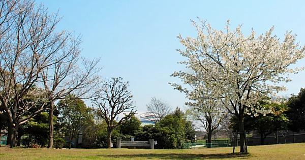 辰巳の森海浜公園 バーベキュー広場 (BBQデリバリーサービス)