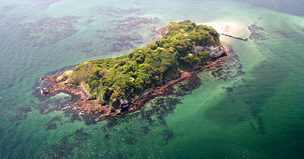 猿島BBQ