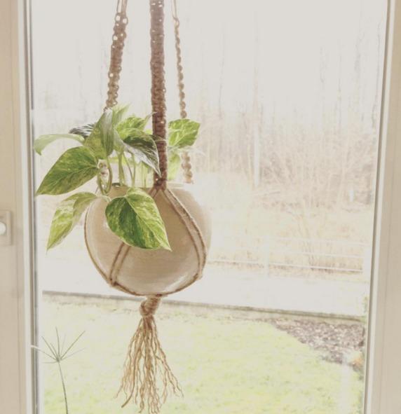 窓際に吊るされたプラントハンガー