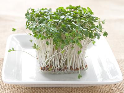 【Dr.野菜ソムリエのコラム】vol.4: がん予防の強力な味方 ~ブロッコリーとその新芽~