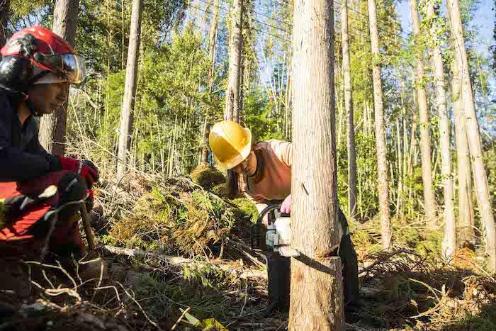木をチェーンソーで伐採