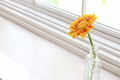 「西の窓辺に黄色い花を飾りなさい」という風水で幸せにはなれない
