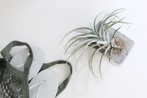 水・土不要な楽ちん植物!「エアプランツ」を夏インテリアに取り入れよう