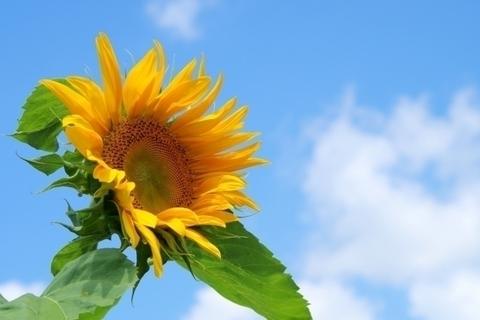 さよならSMAP……私たちは「世界に一つだけの花」を忘れない