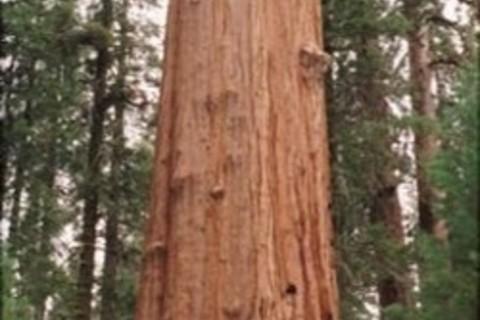 「こじゃれた巨木の会」発足