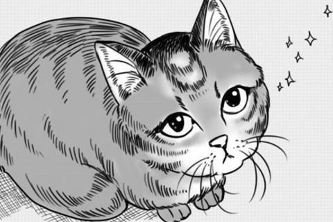 「猫のいる、朝の日課」ただいまみいちゃん#2