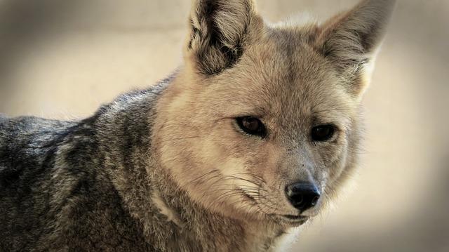え?FOXのTVドラマが観られるんですか…!?!?|「FOXのTVドラマだって楽しめる!!dTVで配信中☆」の1枚目の画像