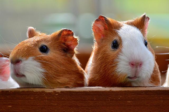 いつの時代も、動物たちは大人気!|「可愛い動物からちょっと怖い動物まで。動物が主役の映画10選」の1枚目の画像