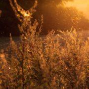 花粉症の季節が到来!持っていると役立つ花粉症パパ活女子にオススメの小物