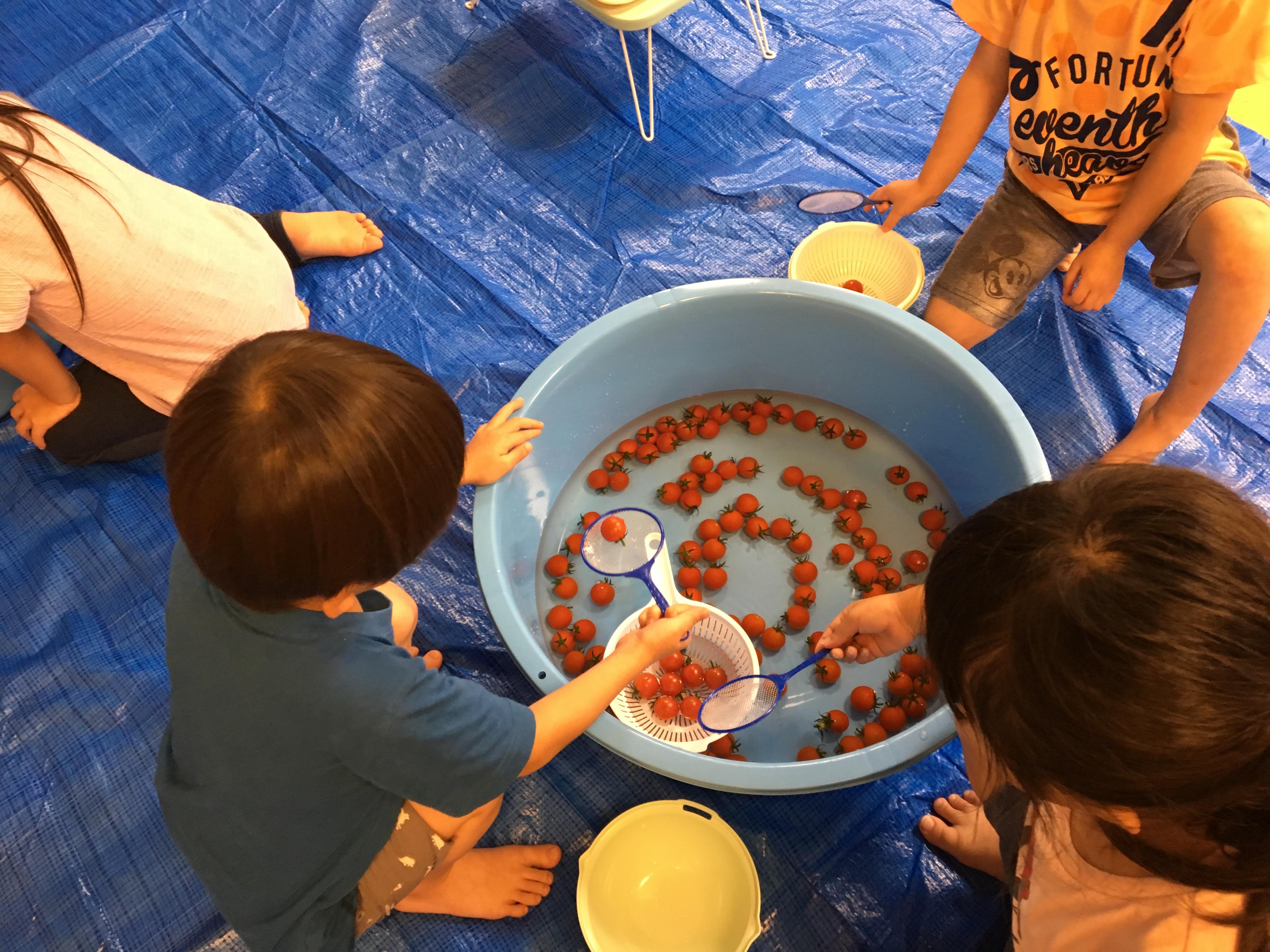 「やさいと仲良し大作戦」と題し、ミニトマトの食育イベントを明日葉保育園にて開催しました|ソシオークホールディングス株式会社のプレスリリース