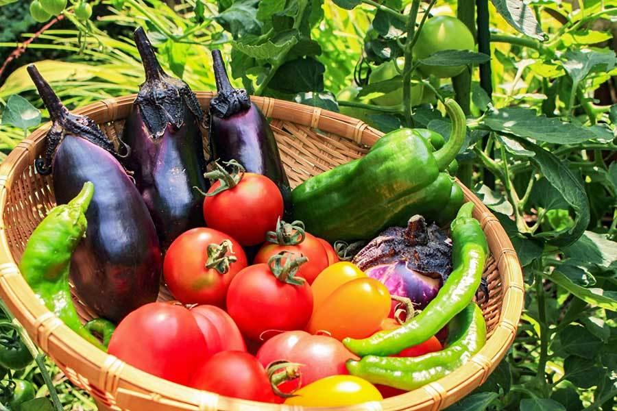 熱中症になりにくい身体を作るには食事の工夫を 必要な栄養素とおすすめ食材とは(Hint-Pot) - Yahoo!ニュース