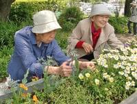 """植物を育てる介護予防の""""園芸療法""""、収穫し食べることが大事 ニフティニュース"""