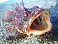 【食育専門家・浜田峰子の魚で元気な未来!】(20)旬の魚は栄養豊富 - 産経ニュース