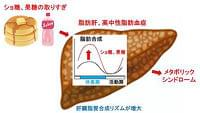 砂糖の取り過ぎがメタボになる原因が分かった 名大グループが解明 | マイナビニュース