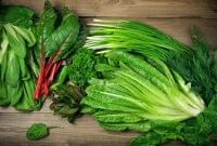 緑の葉物野菜は筋力アップに効果 やや大きめ一株目安