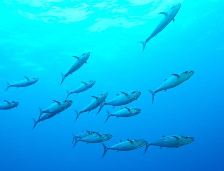 妊娠中に注意したい魚介類の水銀①