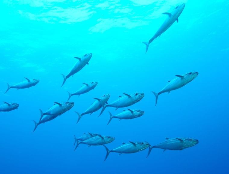 妊娠中に注意したい魚介類の水銀