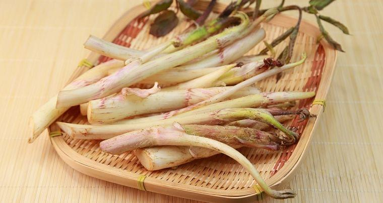 3月の旬の野菜「ウド」の栄養素や歴史