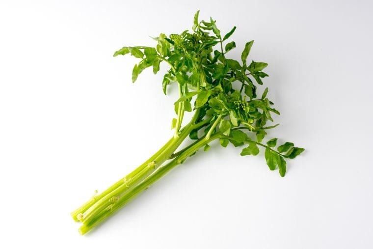 「クレソン」の栄養素や歴史【管理栄養士監修】3月の旬の野菜の栄養学