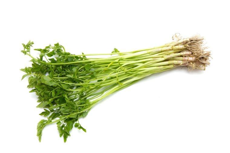 【管理栄養士監修】2月の旬の野菜「セリ」の栄養素や歴史
