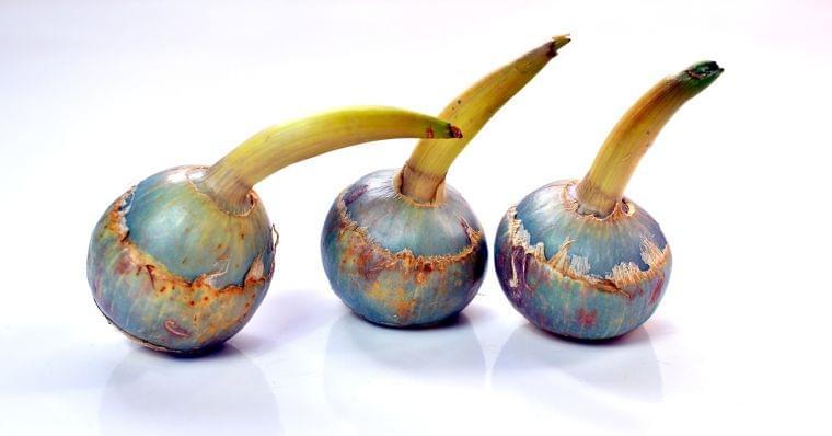 「クワイ」の栄養素や歴史【管理栄養士監修】12月の旬の野菜の栄養学