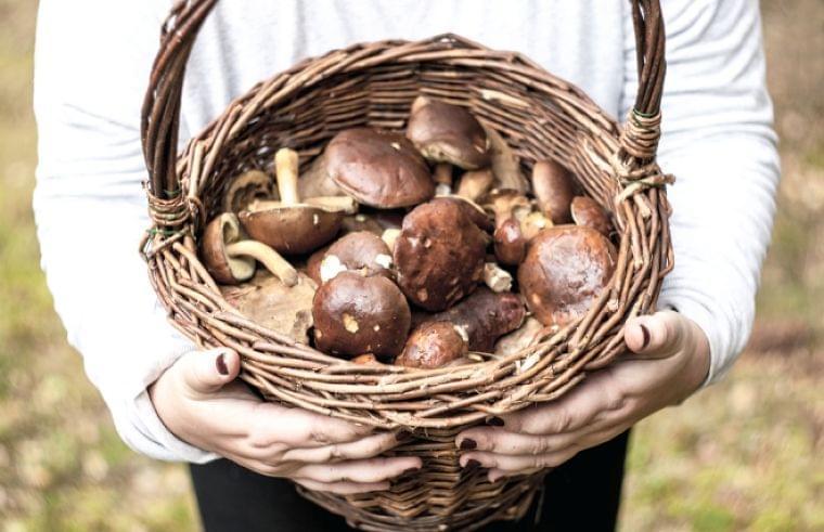 食べ過ぎを防ぐ秋の低カロリーメニュー【管理栄養士が教える】|ウートピ