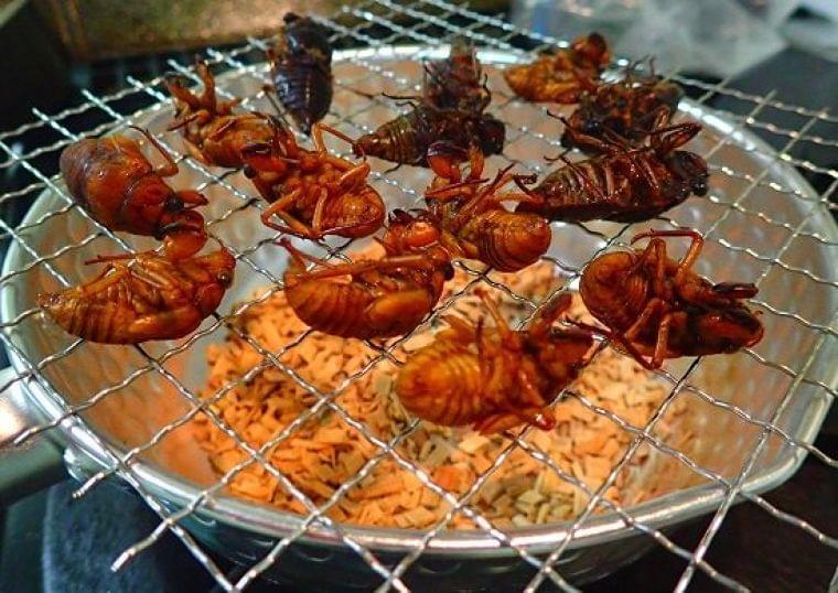 昆虫食に改めて注目 アメリカではコオロギのプロテインバーがセレブから一般まで人気|ニフティニュース