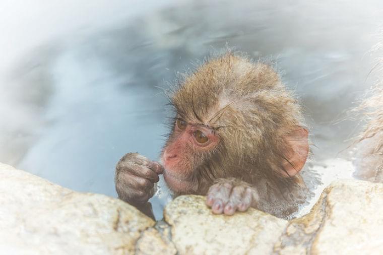 ヒートショックに注意!自分は健康、と思う人ほど危険かも!?(tenki.jpサプリ 2017年12月26日) - 日本気象協会 tenki.jp