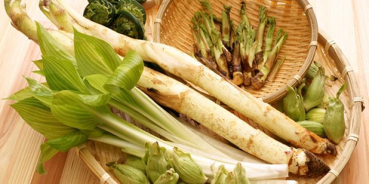 春野菜と山菜で冬の老廃物をスッキリ!栄養士おすすめの食材で自然派料理 Doctors Me(ドクターズミー)
