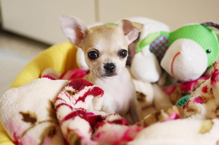 室内飼いペットにも病原体が潜む可能性が。人への感染を防ぐには? (1/1)| 介護ポストセブン