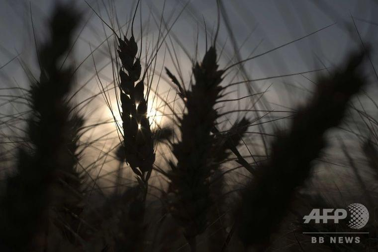 大気中CO2濃度の上昇、栄養不足の急増招く恐れ 研究 写真1枚 国際ニュース:AFPBB News