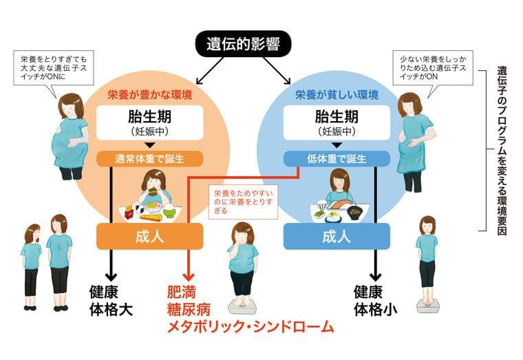 2500g未満の赤ちゃん、糖尿病などのリスクが高い:日経ウーマンオンライン【女性のカラダと栄養のはなし】