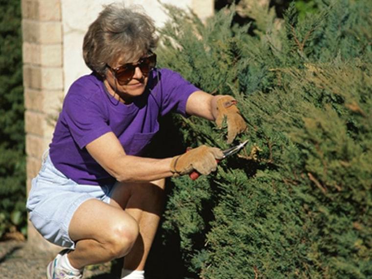 「家事や園芸で高齢女性の心疾患のリスク低減」米カリフォルニア大学研究|@DIME アットダイム