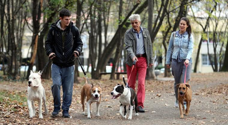 犬を飼うと健康に=週4時間弱の散歩で-英研究:時事ドットコム