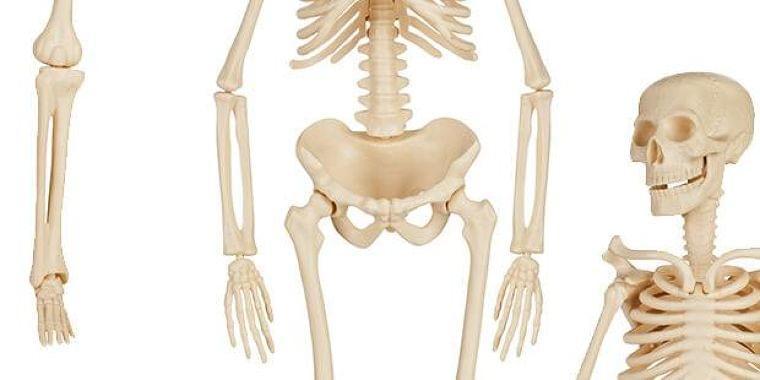 女性の4人に1人は骨がスカスカ? 骨粗しょう症ってどんな病気? Doctors Me(ドクターズミー)