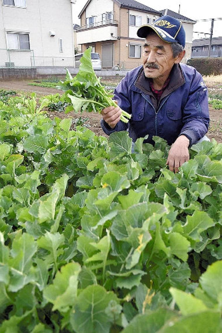 地域の伝統野菜 次世代へ : ライフ : 読売新聞(YOMIURI ONLINE)